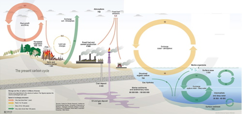 carbon cycle simple explanation