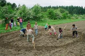 School gardens for Gardening tools for schools